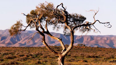 Event: Australian Arid Lands Botanic Garden