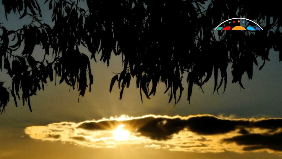 Video: Eucalypts Ancient And Diverse (Australian Academy Of Science)