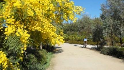 Walk: Royal Botanic Gardens Cranbourne