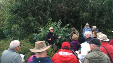 Walk: Royal Tasmanian Botanical Gardens