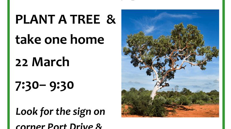 Activity: Environs Kimberley Tree Planting