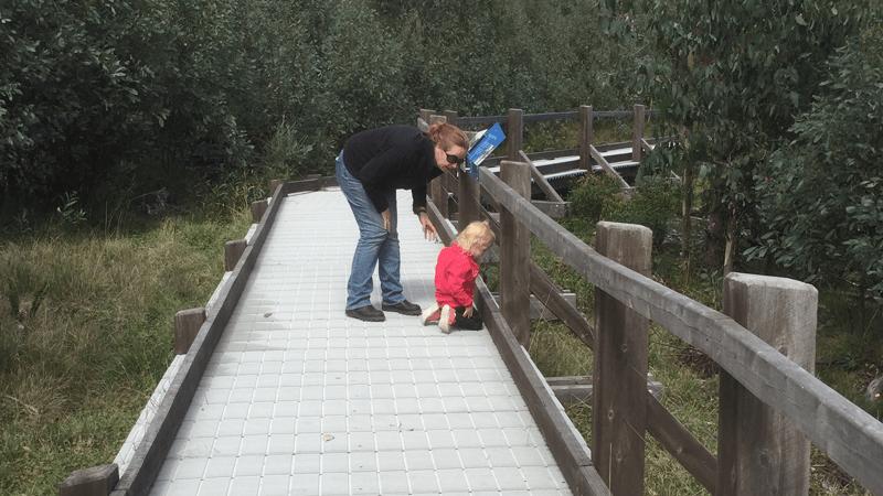 Activity: Lake Mountain Dahl Boardwalk