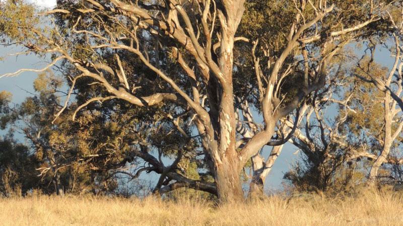 Tree Planting: Wedderburn Conservation Management Network