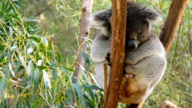 Educating the next generation: Healesville Sanctuary