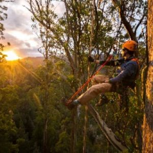 Steve Pearce 12 Months Of Eucalypts Video Series - Fellowship 2020