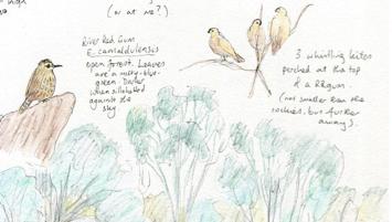 Nature Journaling Workshop: Yarra Bend, Melbourne CANCELLED