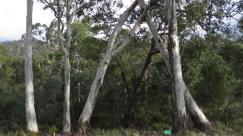 Self Guided Walk:  Tasmanian Bushland Garden Buckland