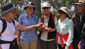 Guided Walk: Kur-in-gai Wildflower Garden - CANCELLED