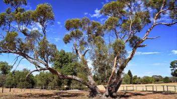 Australian Inland Botanic Gardens, Wentworth