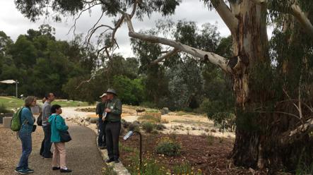 Pests of Eucalypts Workshop: Australian National Botanic Gardens CANCELLED