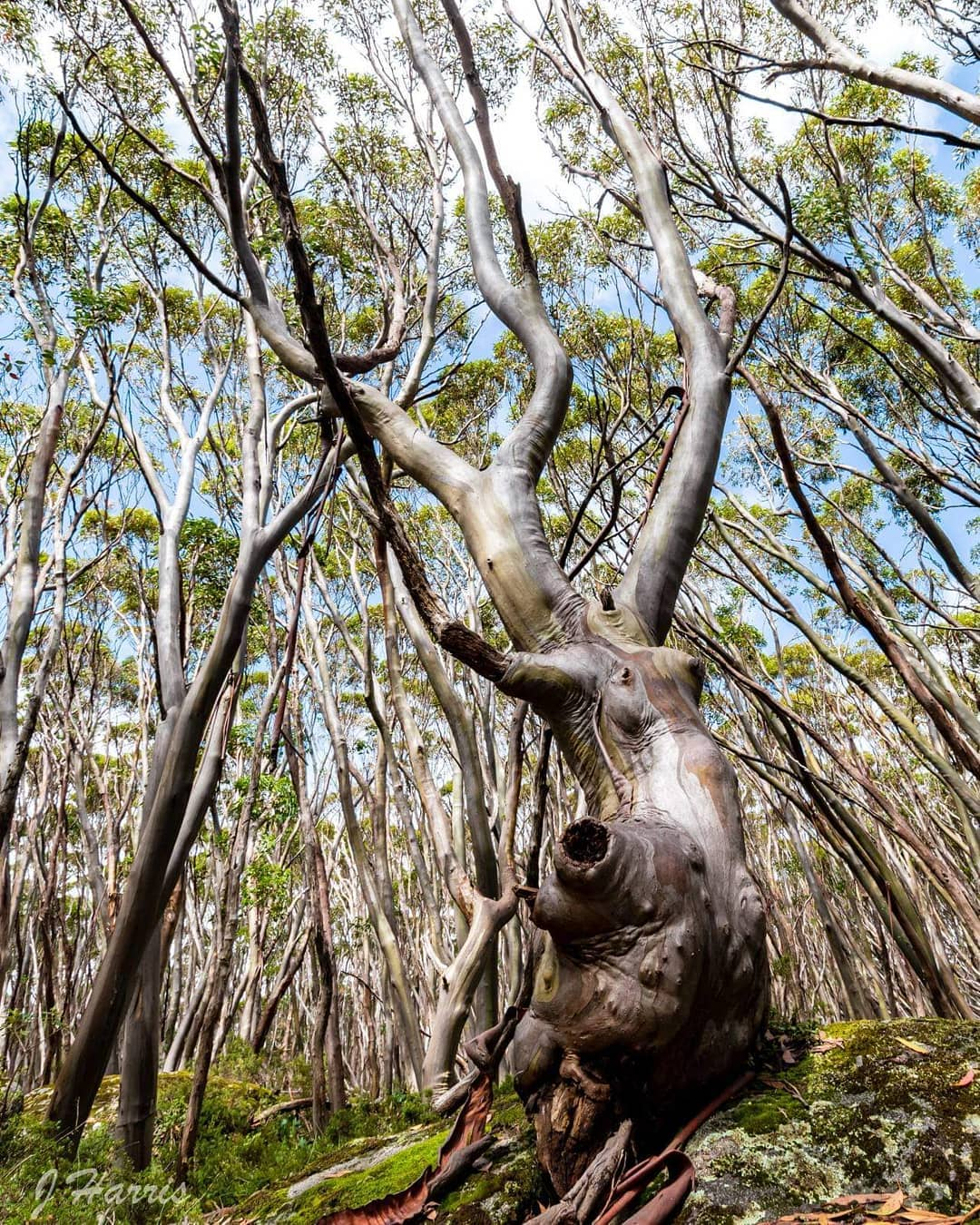 National Eucalypt Day Photography Competition