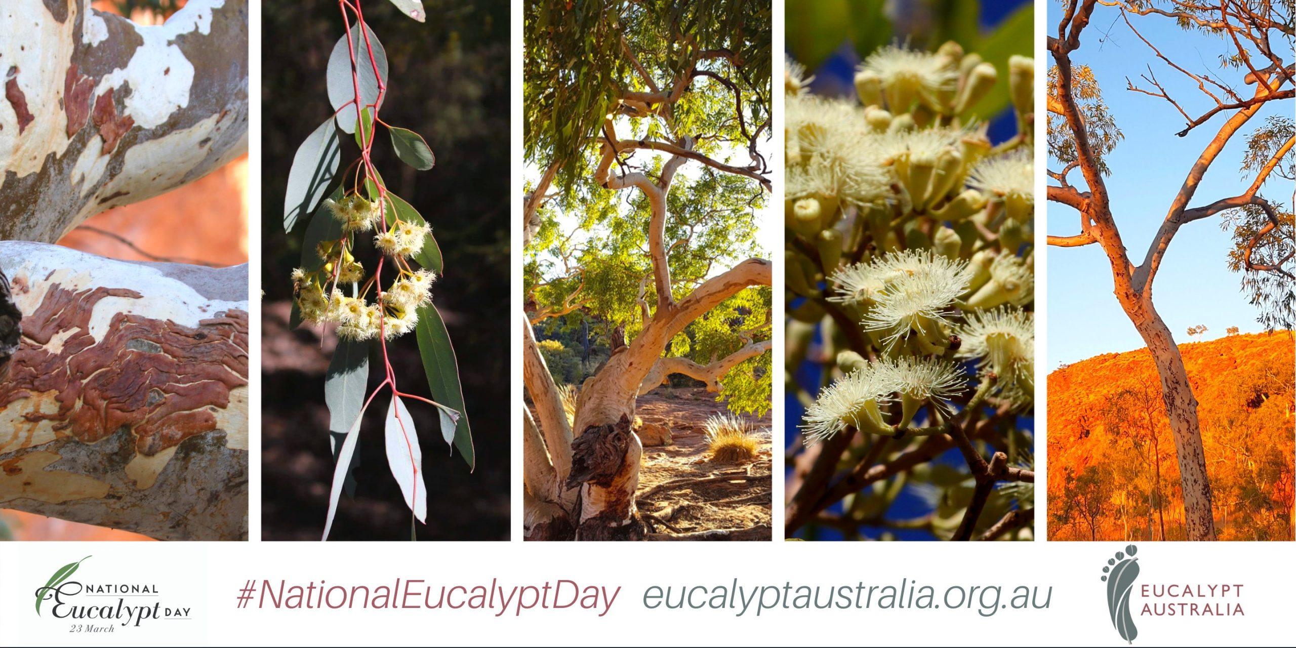 National Eucalypt Day